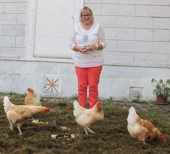 Des poules municipales contre le gaspillage