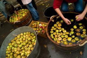 91, Chalo-Saint-Mars, Fete de la pomme